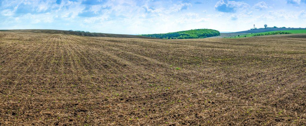 Plantación de remolacha azucarera - Sector Agrícola